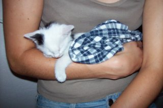 Lucky was about 4 weeks when we found him motherless in the garden
