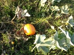 D's pumpkin
