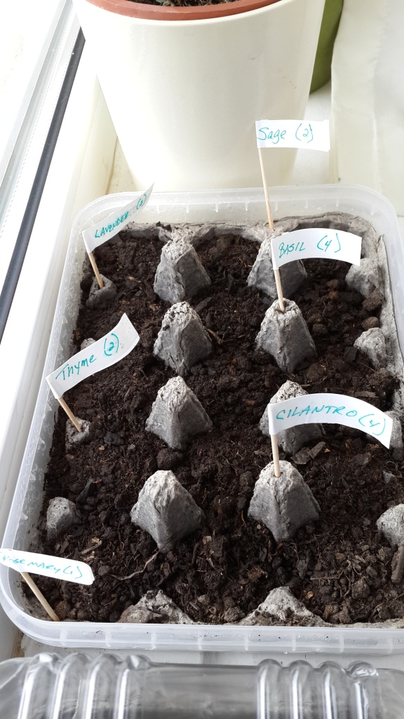 Seeds for Herbs in an Egg Carton