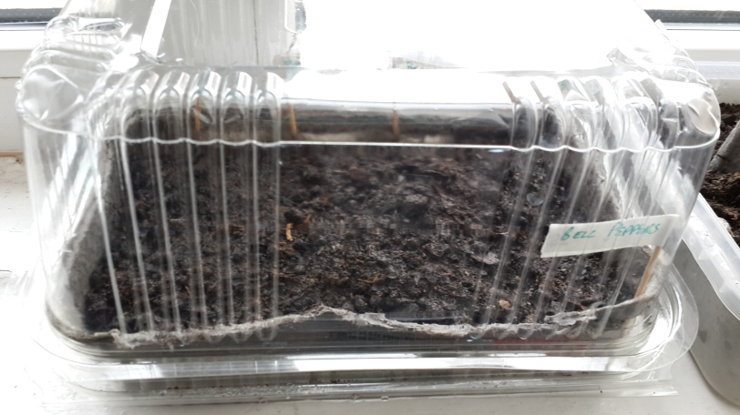 Recycling for a Green House Effect